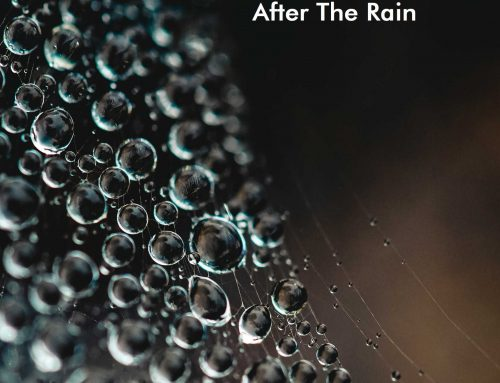 NHT#8… After The Rain
