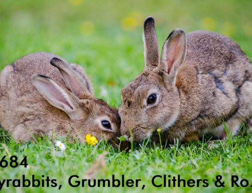 PCP#684… Bunnyrabbits, Grumbler, Clithers and Ro…