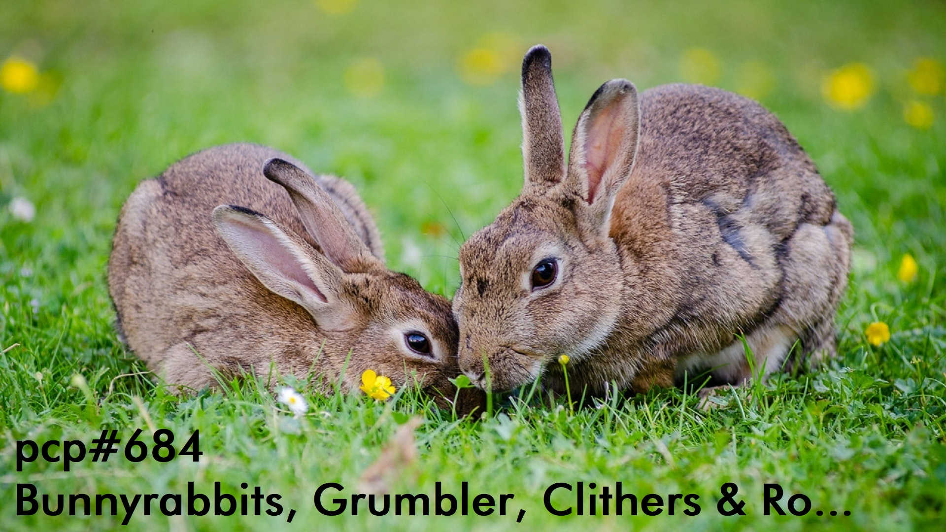 PCP#684... Bunnyrabbits, Grumbler, Clithers and Ro...