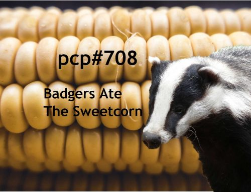 PCP#708… Badgers Ate The Sweetcorn…..