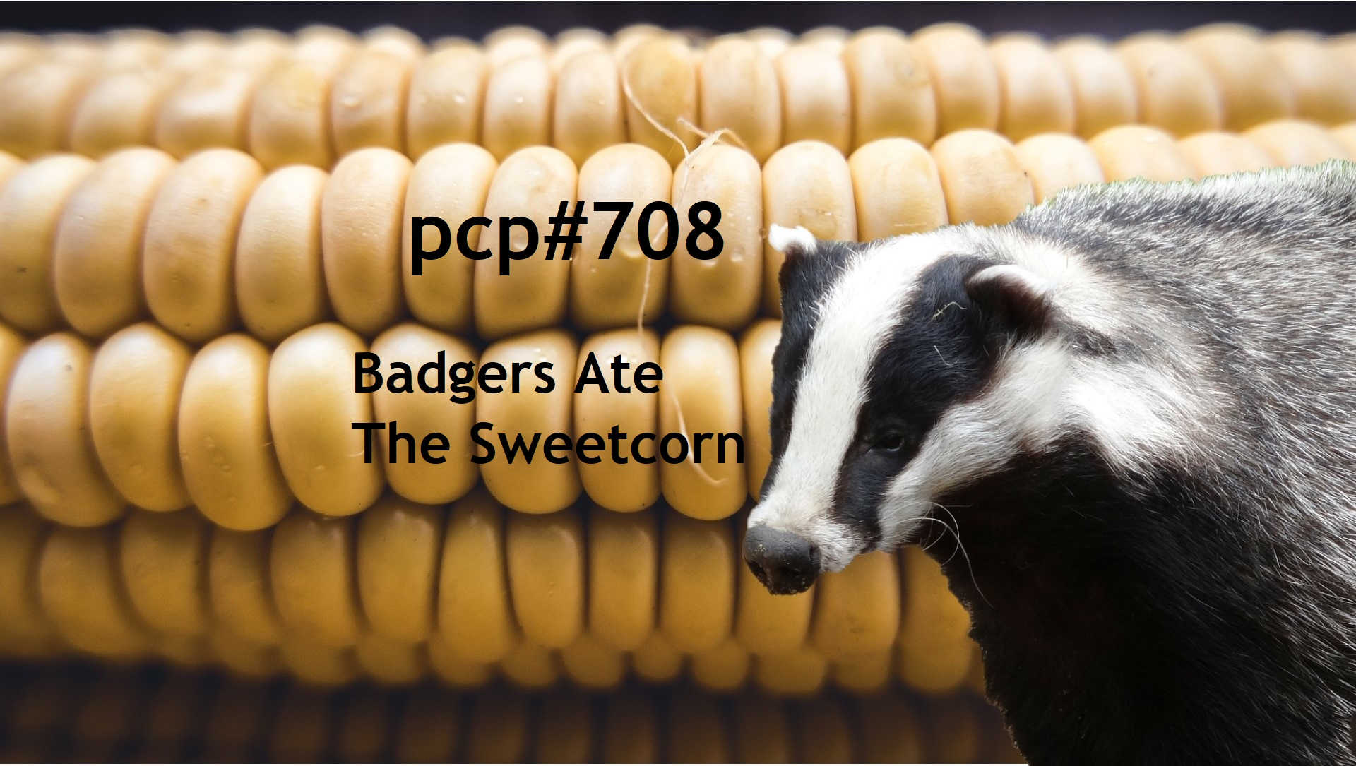 PCP#708... Badgers Ate The Sweetcorn.....